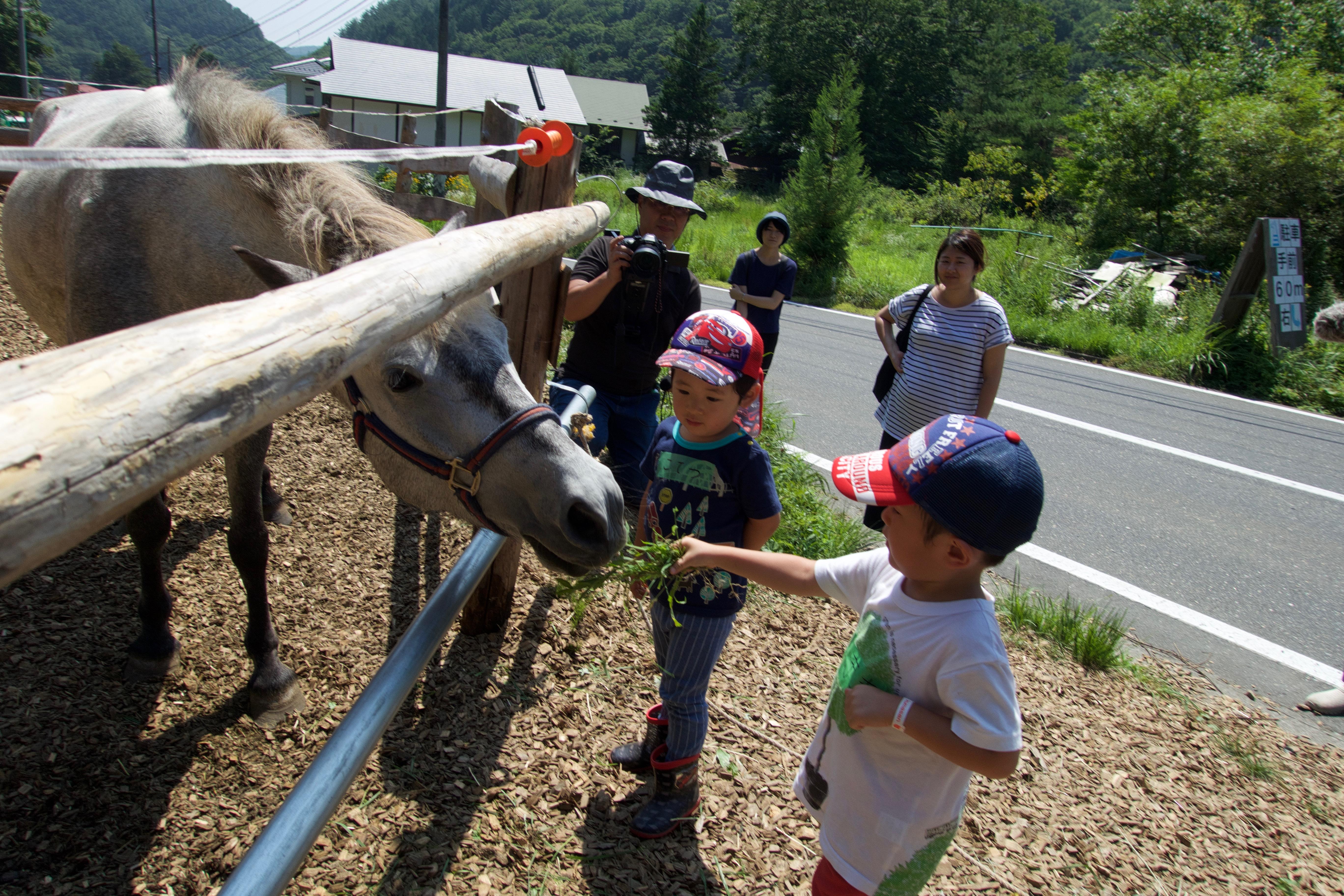 コラム〜馬の暮らしや子どものことなど