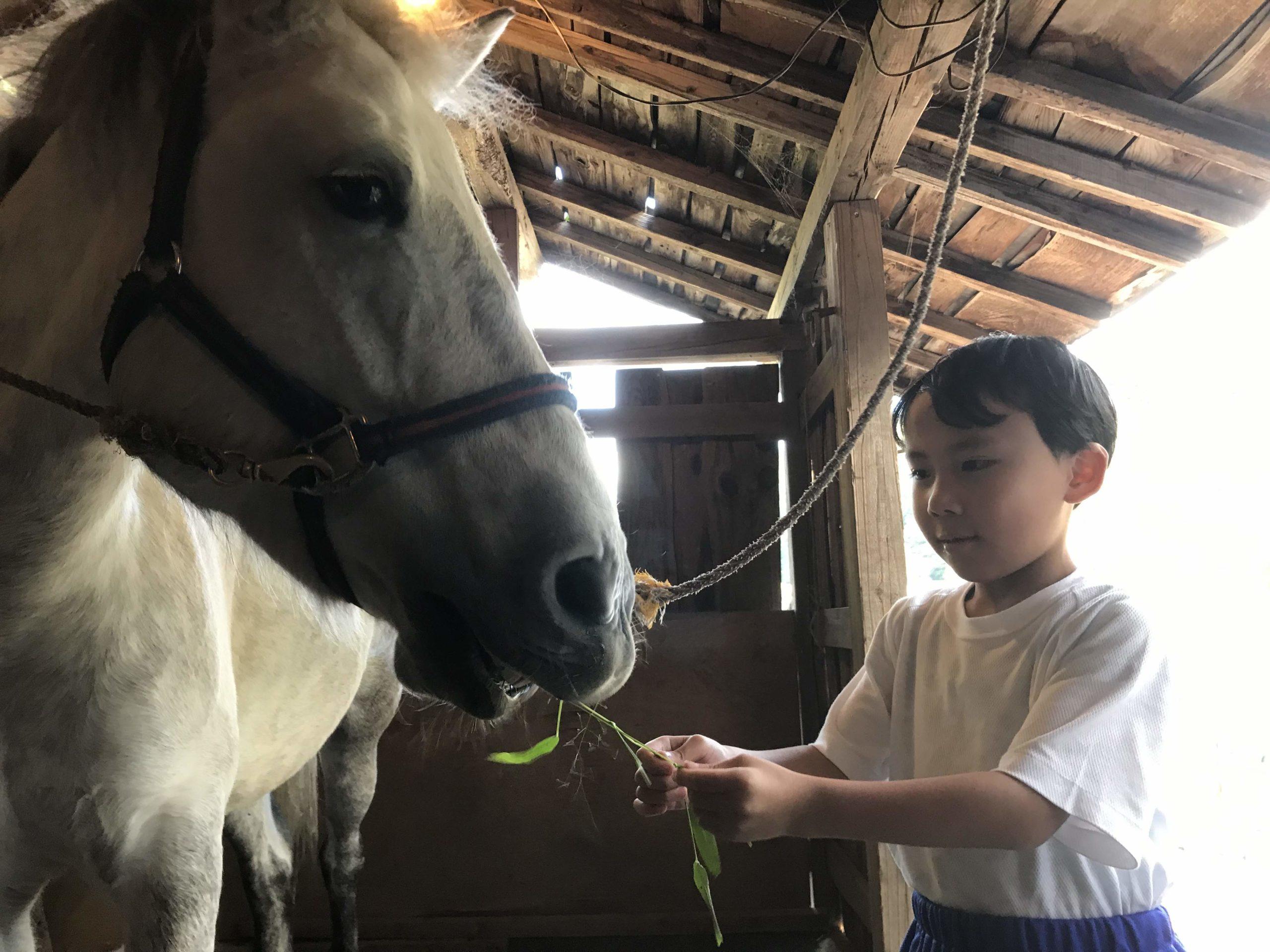 【終了】ホースセラピー講座「これでいいの?子どもとの関わり方」 その答えは 馬が知っている! 10/11(日)
