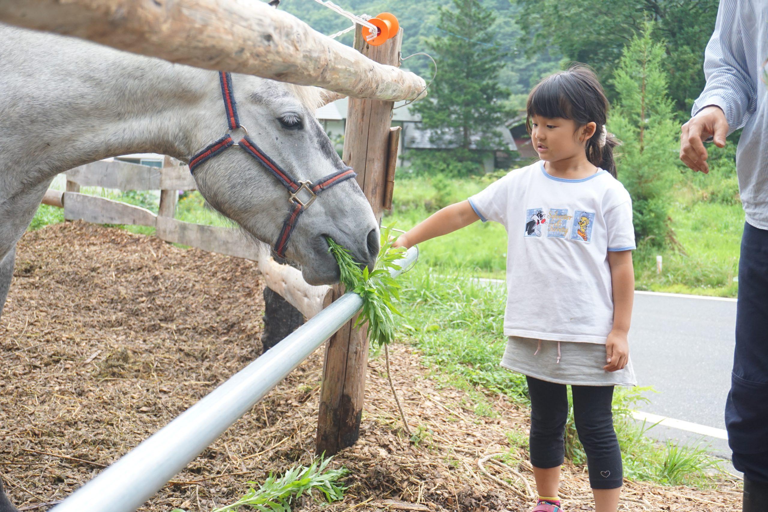 【募集中】ホースセラピー講座「馬の暮らし型セラピー勉強会」 11/14(土)
